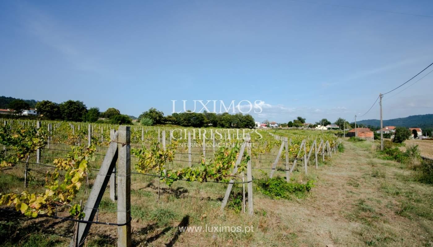 Ferme séculaire avec vignoble de vin vert, Barcelos, Portugal_131364