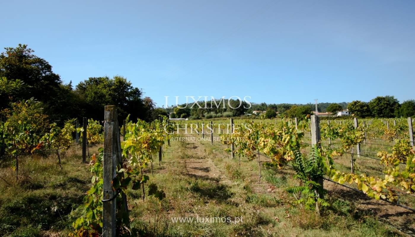 Ferme séculaire avec vignoble de vin vert, Barcelos, Portugal_131365
