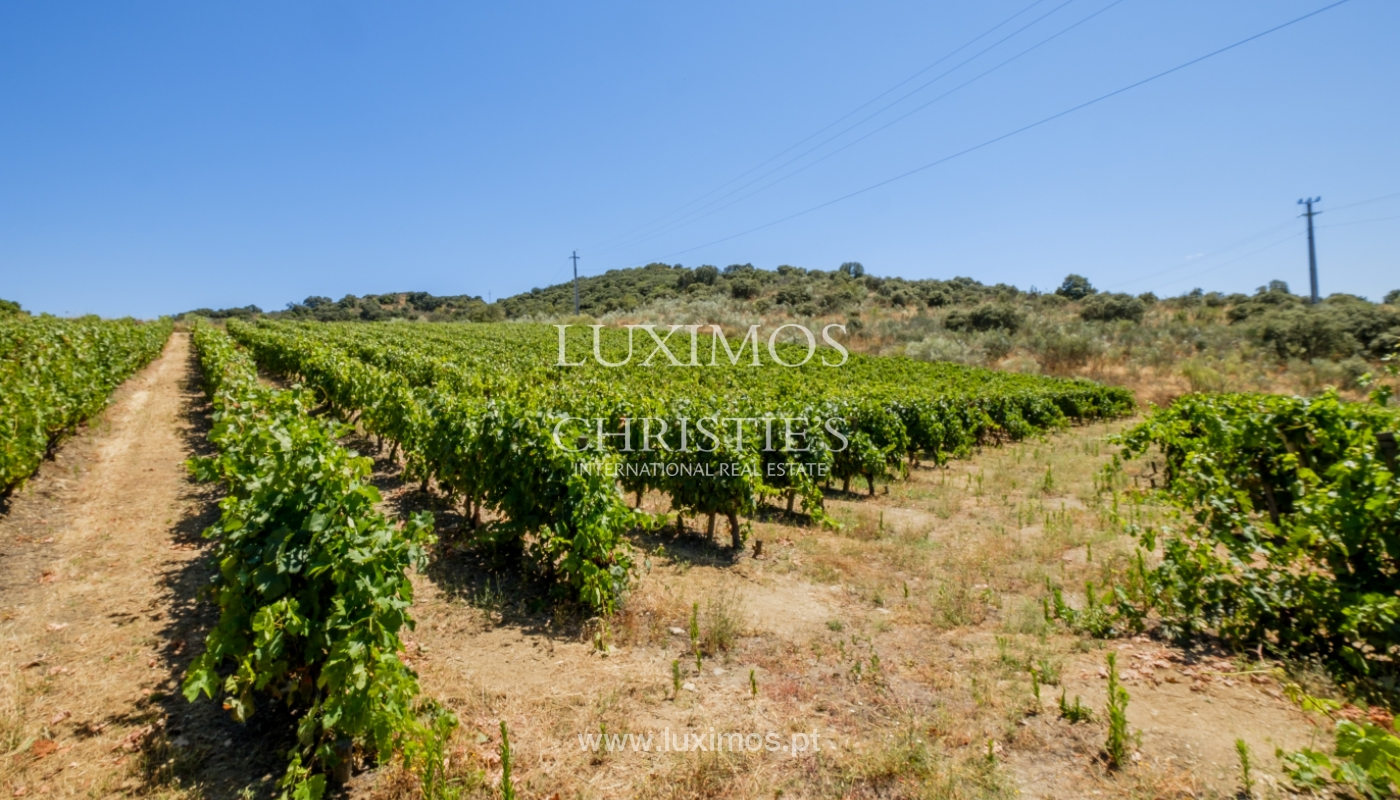 Sale: agricultural property in the region of Douro Superior, Portugal_143868
