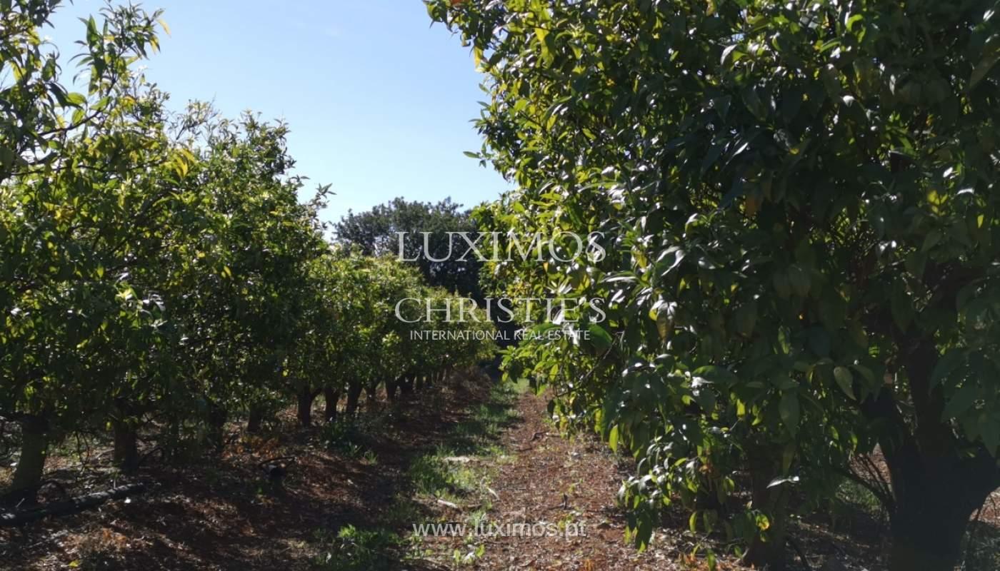 Quinta com moradia V4 e amplo terreno, Bolqueime, Algarve_158074