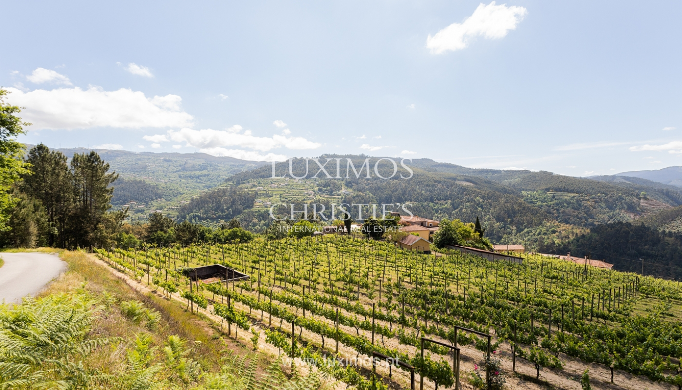 Sale of Vineyard by the Douro River, in Castelo de Paiva, North of Portugal_171216