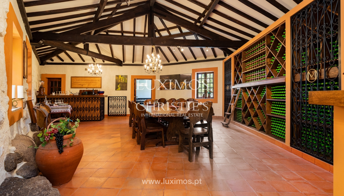 Sale of Vineyard by the Douro River, in Castelo de Paiva, North of Portugal_171230