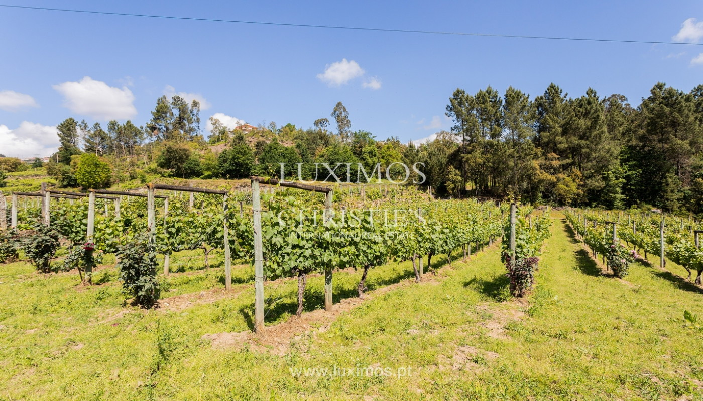 Sale of Vineyard by the Douro River, in Castelo de Paiva, North of Portugal_171238