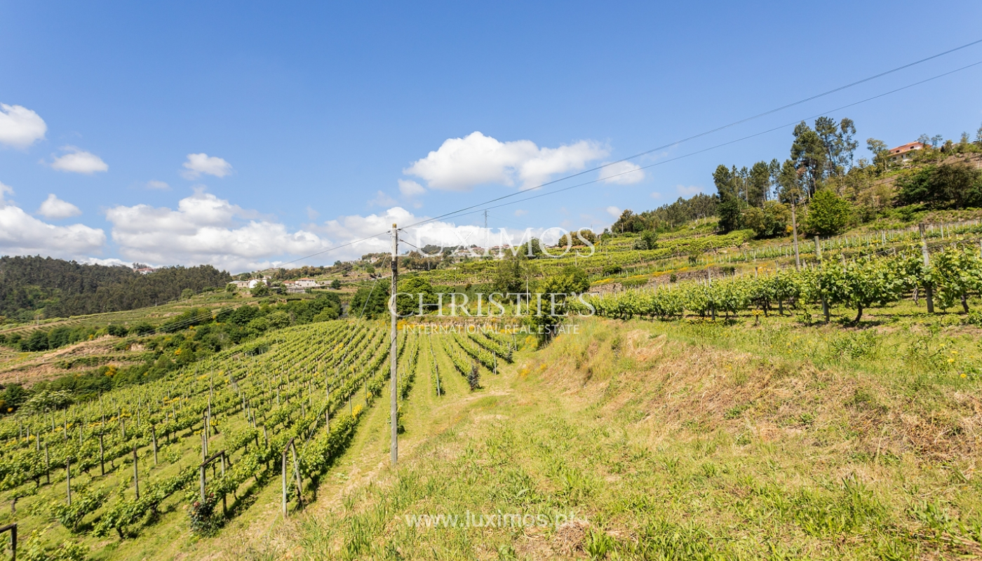 Sale of Vineyard by the Douro River, in Castelo de Paiva, North of Portugal_171239