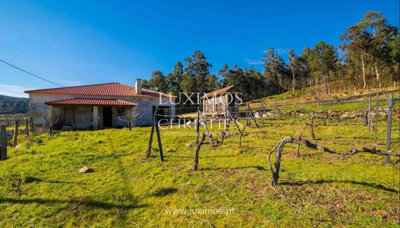 Fünfte, mit der Produktion von Reben und Obstbäumen, Baião, Portugal_41444