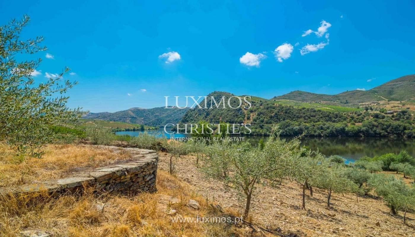 Farm for sale, with river front, Torre de Moncorvo, Douro, Portugal_62681