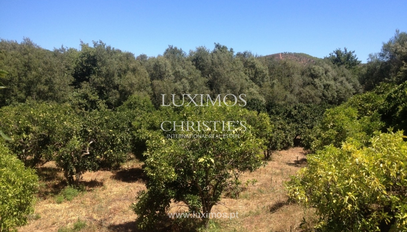 Plot of land for sale, Silves, Algarve, Portugal_65425