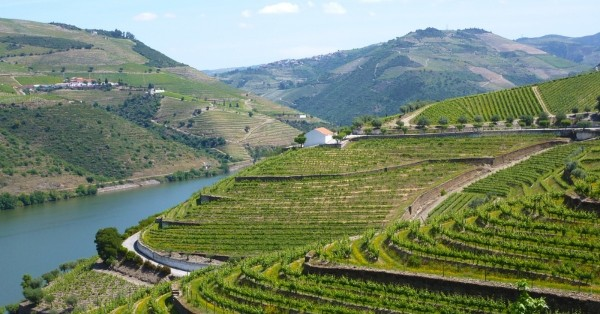 3 vineyard farms for sale to know and buy in Douro Valley, Portugal