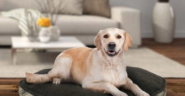 Top 5 des races de chien idéal pour les appartements