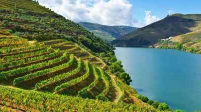 Uma viagem vínica pela Península Ibérica