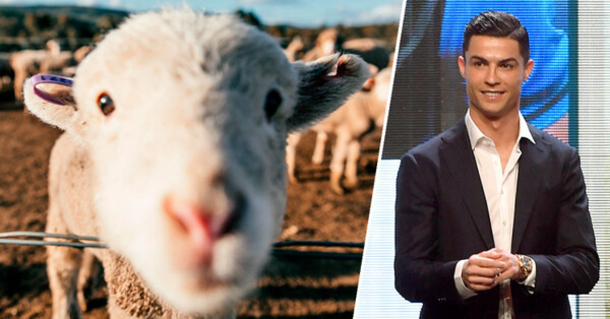Ronaldo moves house due to sheep. How to buy a house without going wrong?